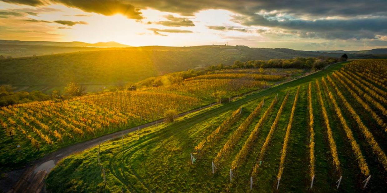 Vinařství Stapleton & Springer