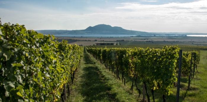 Sonberské vinice